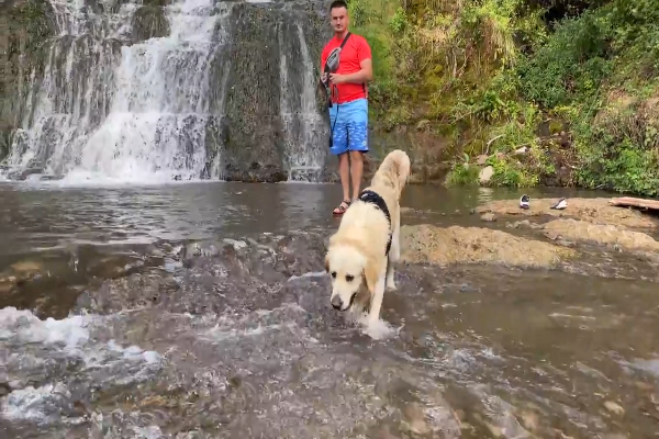 Golden Retriever va alle cascate per la prima volta (VIDEO)