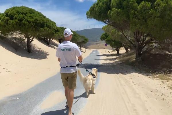 Bailey il golden retriever vede l'oceano per la prima volta(VIDEO)