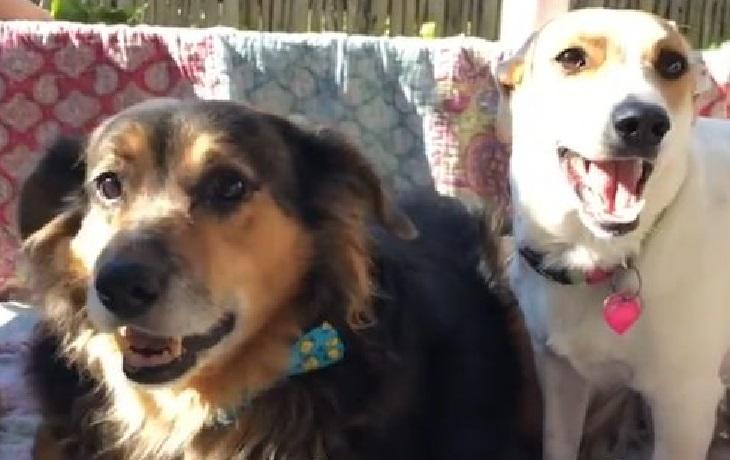 Il cucciolo sull'orlo del baratro viene incredibilmente salvato (VIDEO)