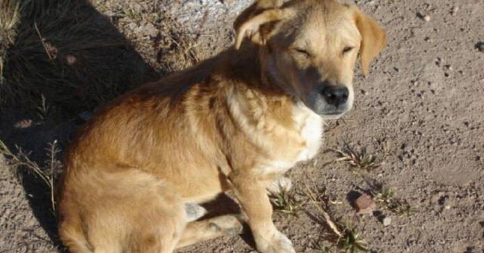 salvataggio cane caduto pozzo 30 metri