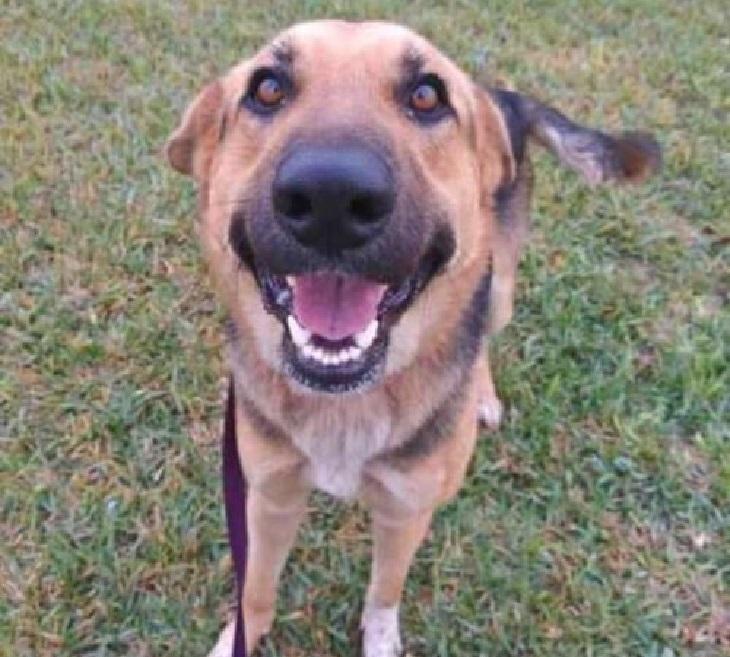 penelope cane adozione ashli