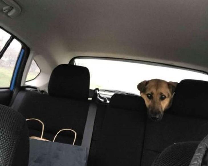 penelope cane timore umani