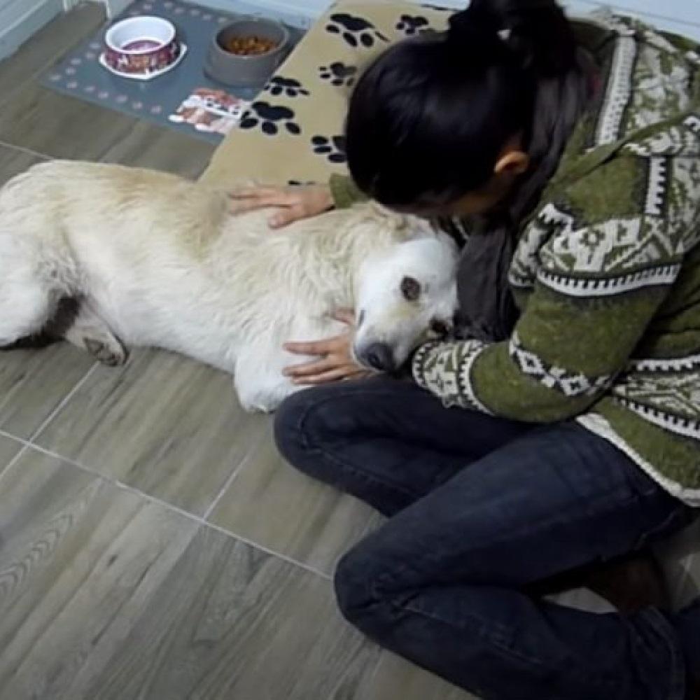roman cane salvato fondazione