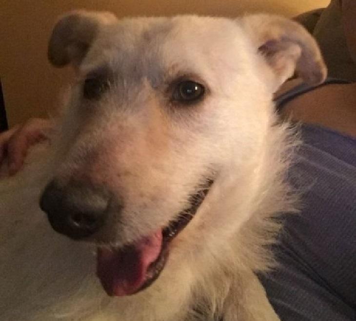 Il salvataggio del cane di strada con un cancro alla milza (VIDEO)