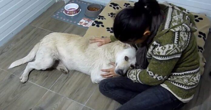 salvataggio cane strada con cancro milza
