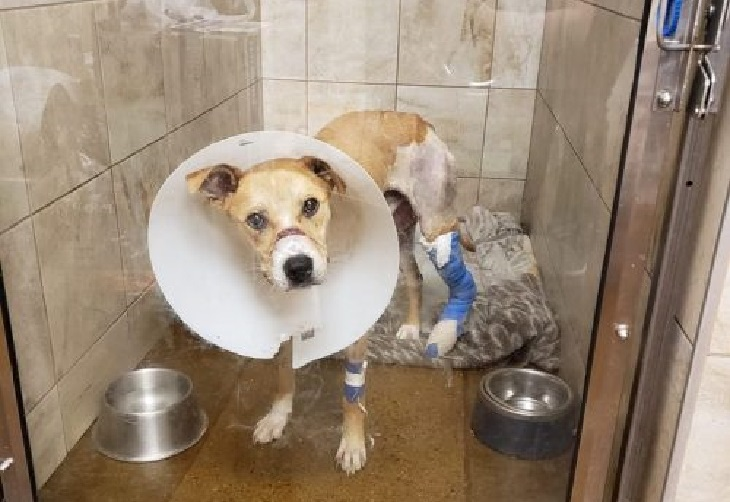 riptide cane operazione clinica