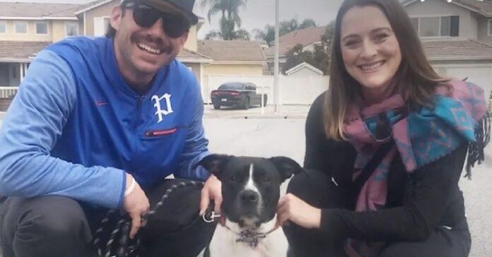 salvataggio cane pitbull che viveva sotto auto