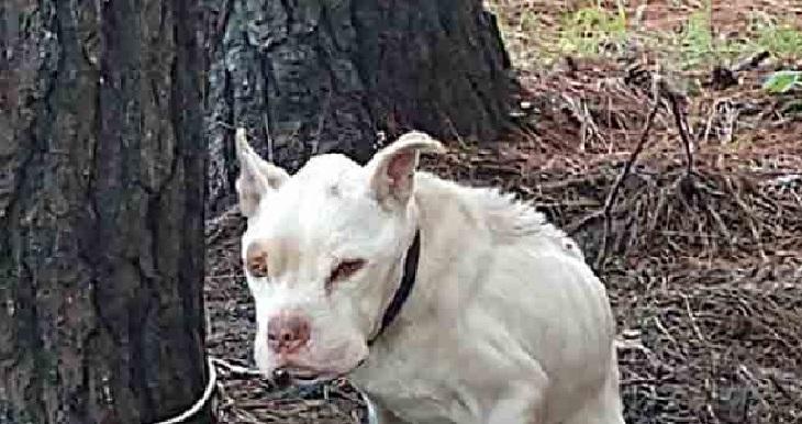 Il salvataggio del cane rimasto incatenato ad un albero per 4 anni (VIDEO)