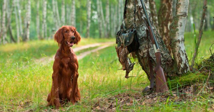 cane seduto sotto un albero