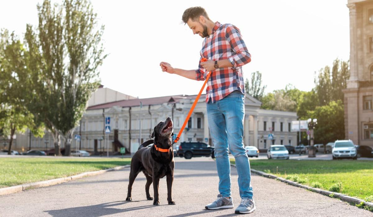 addestrare un cane con gli snack