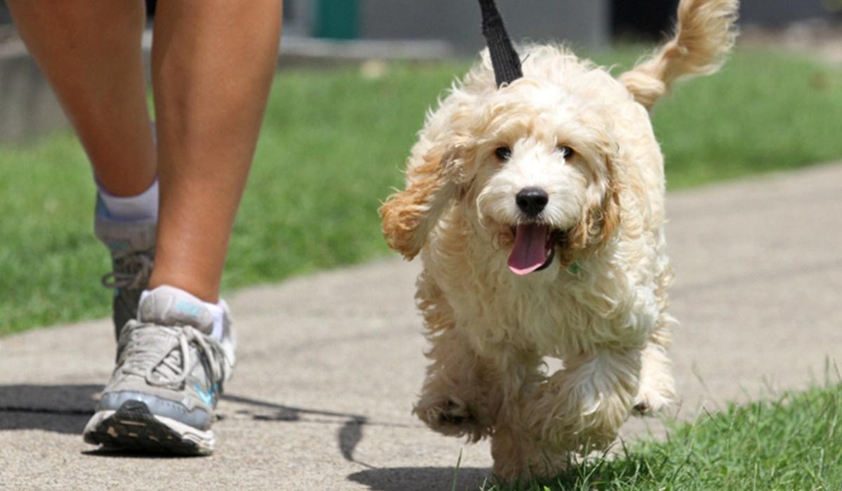passeggiata con un cane di colore bianco