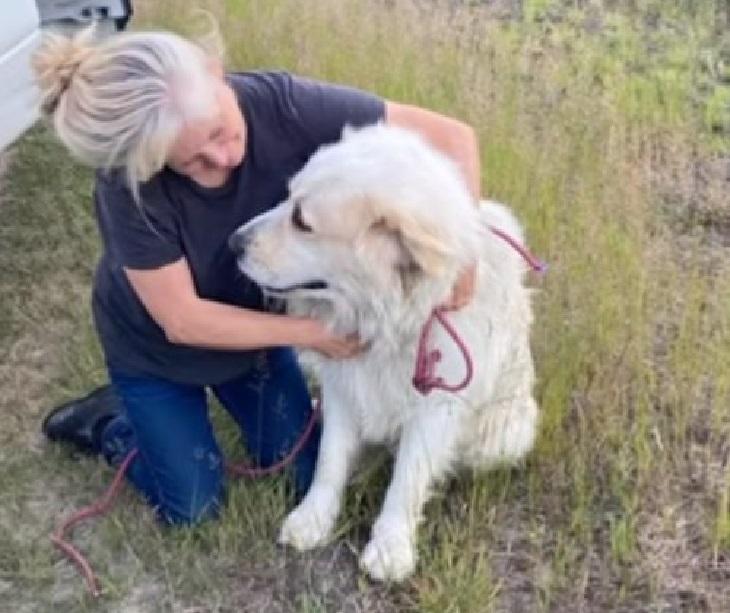 Jasper, il cucciolo disperso nel bosco finalmente ritrovato (VIDEO)