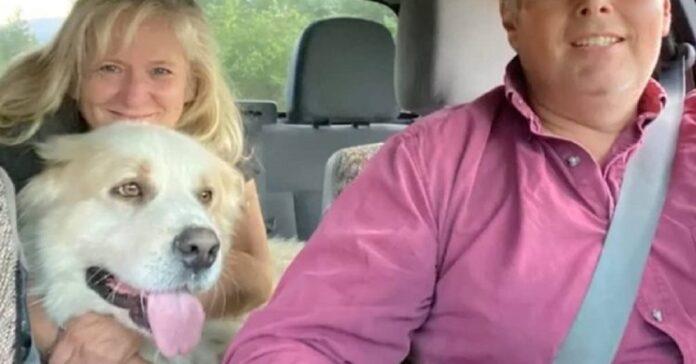 jasper cucciolo disperso finalmente ritrovato