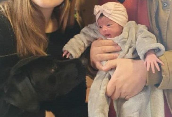 jose cane nascita bambino