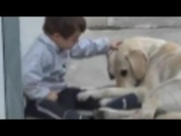 Labrador interagisce con un bambino molto speciale(VIDEO)