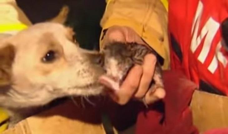 Leo, il coraggioso cane che ha salvato 4 gattini dalle fiamme (VIDEO)