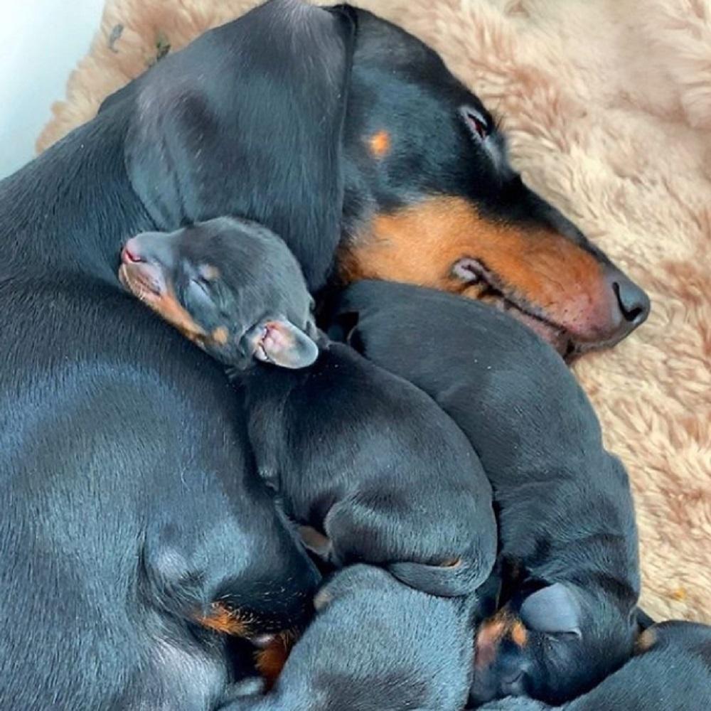 loulou cane abbraccio cuccioli