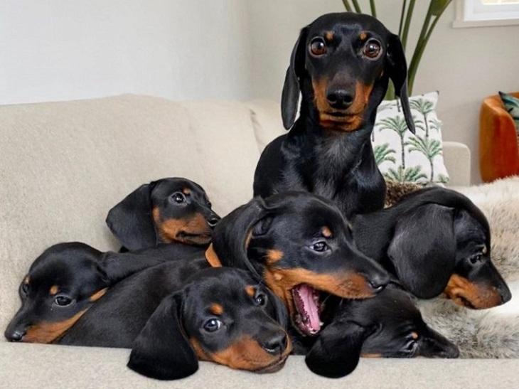 loulou mamma bassotto cagnolina famiglia