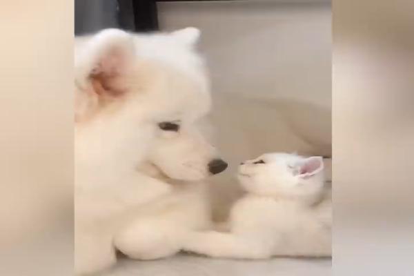 Mamma cane ama il suo cucciolo gatto e il risultato è dolcissimo(VIDEO)