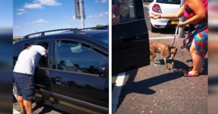 manda in frantumi finestrino auto salvare cucciolo