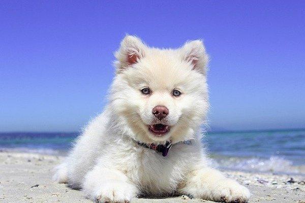 cane al mare si diverte e sorride