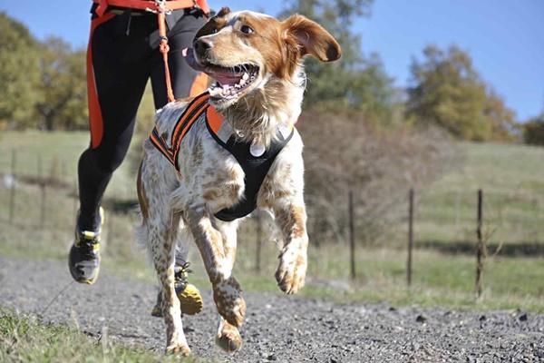 correre insieme al cane
