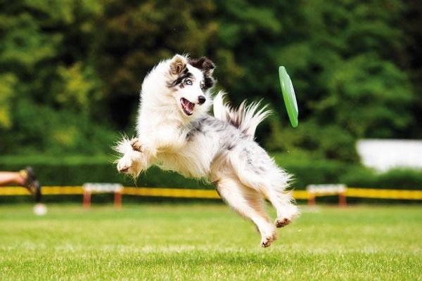 agility sport per cani
