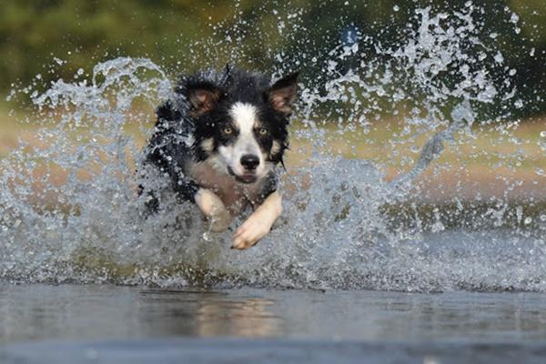 cane che corre nell'acqua