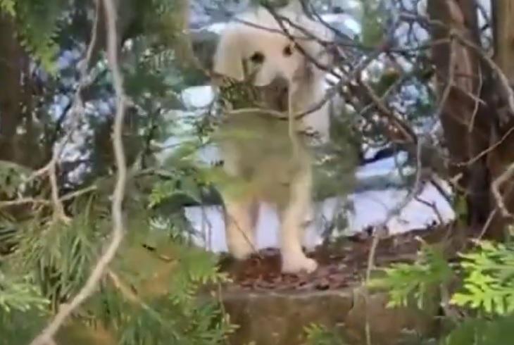 Oliver, il cane di 14 anni che adora fare visita ai suoi vicini (VIDEO)