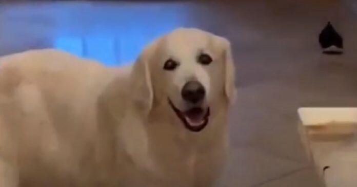 oliver cane 14 anni che adora visita vicini