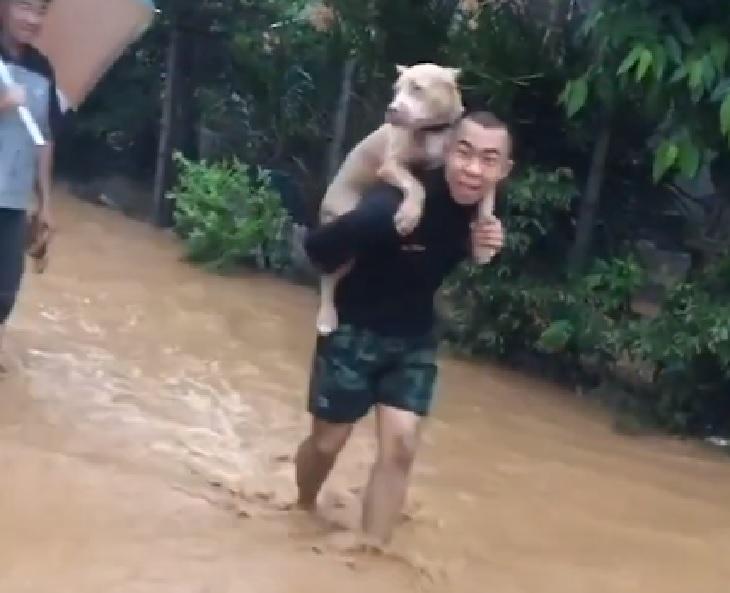 Pitbull messo in salvo da un soldato durante un alluvione (VIDEO)