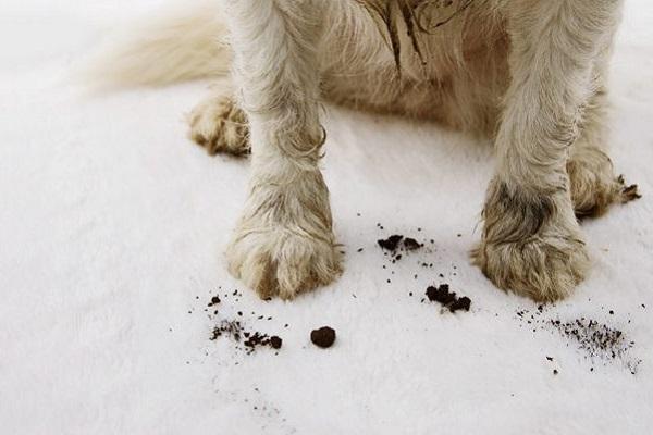 zampe di un cucciolo di cane sporche di terra