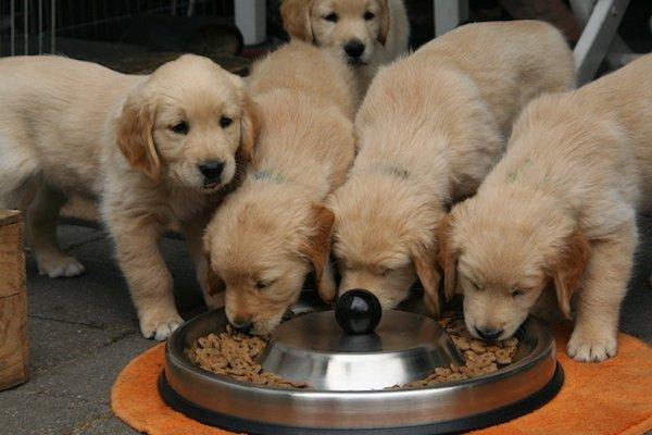 Quando dare cibo umido al cane? I momenti in cui è consigliato