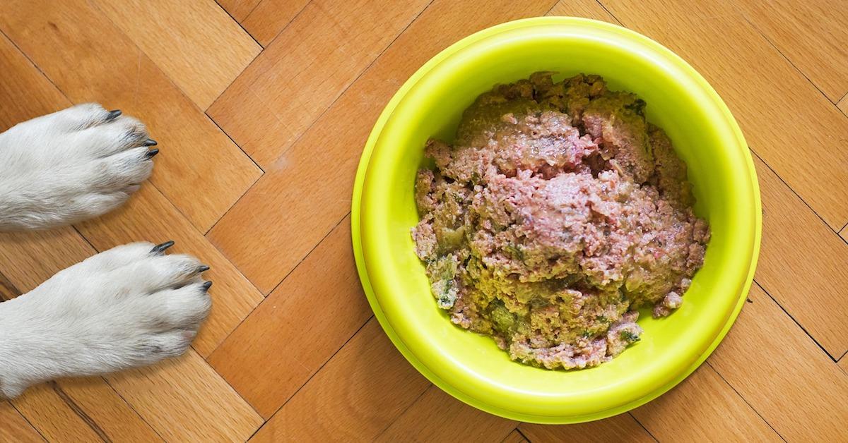 Cane e cibo umido