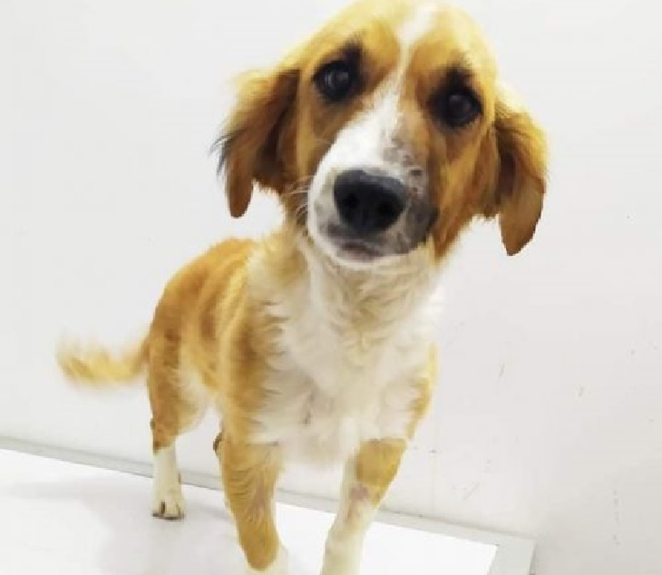 reyna cane salvata gessika