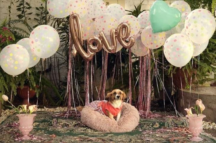 reyna cagnolina adozione festa
