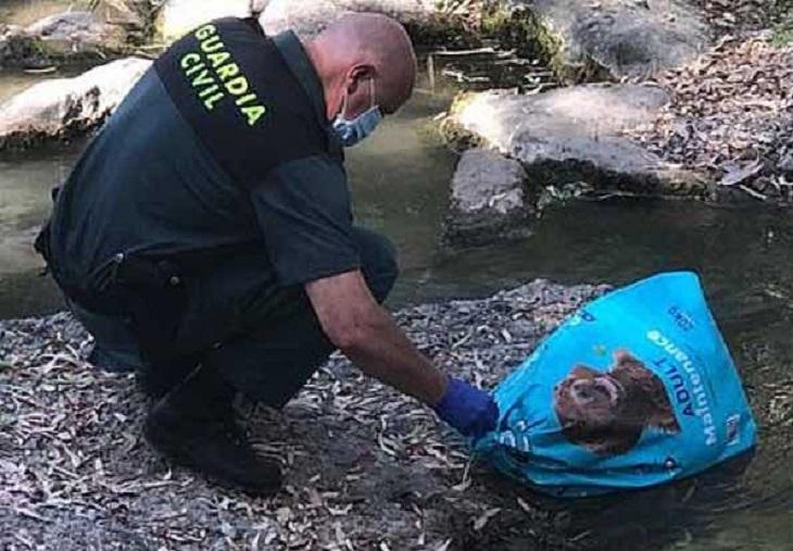 gabi cane soccorso guardia civil