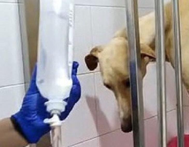gabi cane visite veterinarie