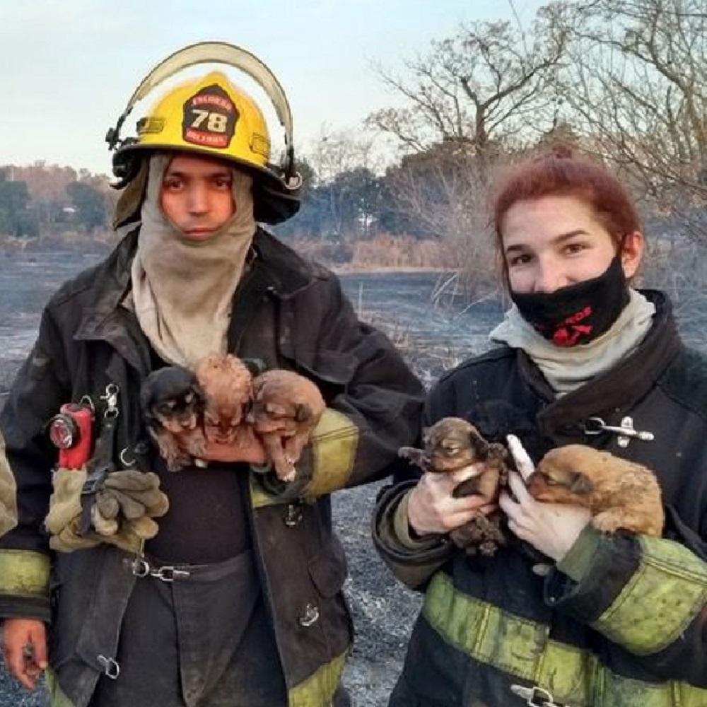 pachi salvataggio vigili del fuoco
