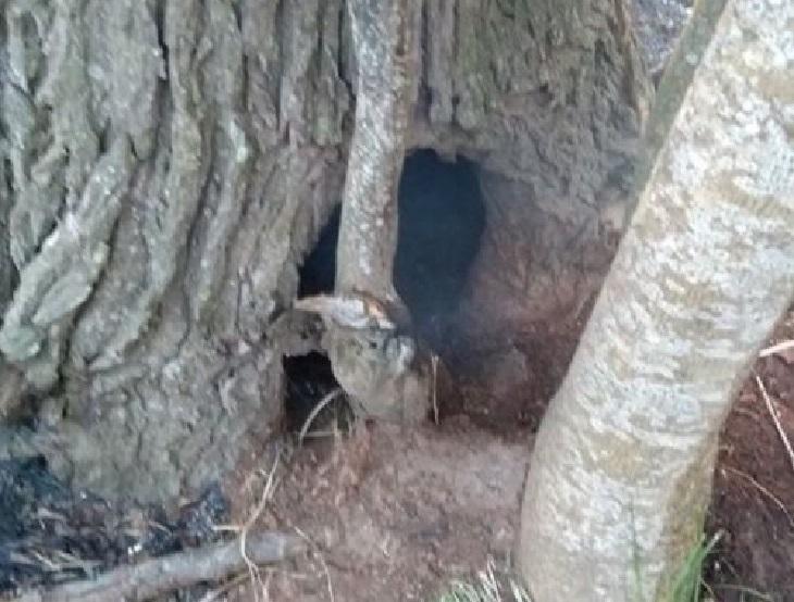 pachi cani fumo dentro tronco