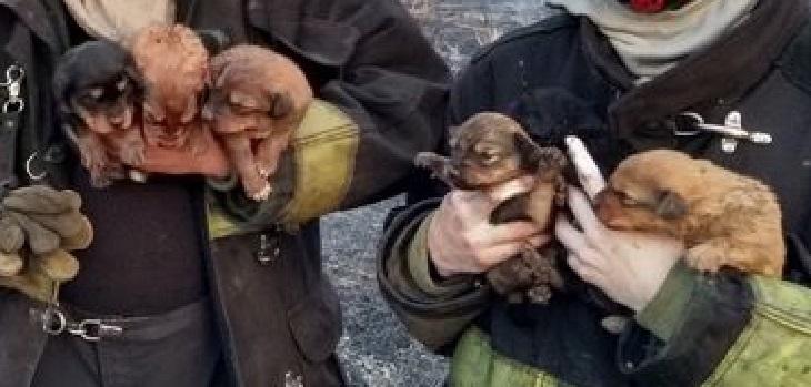 pachi cani trovano casa