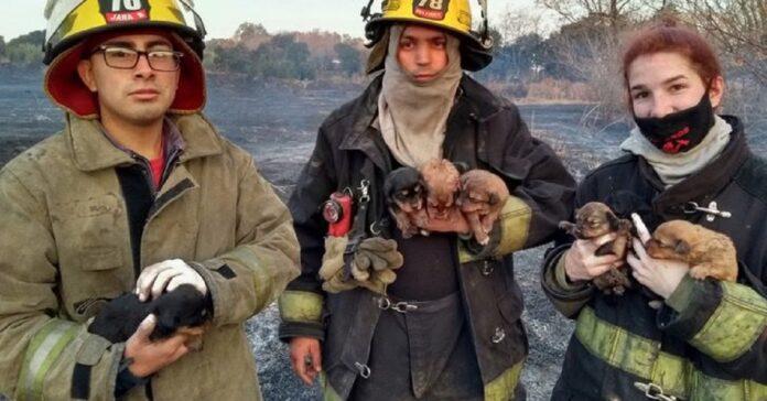 salvataggio di 7 cuccioli bloccati tronco durante incendio