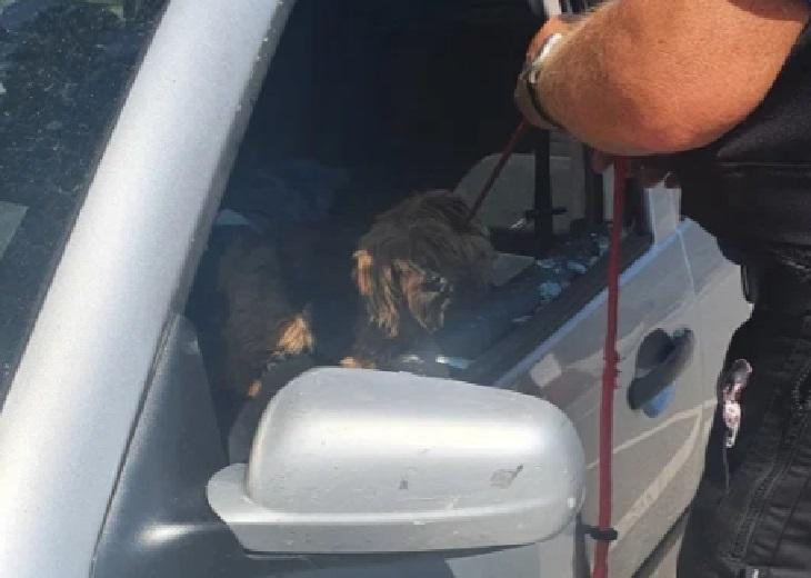 Salvataggio Yorkshire Terrier intrappolato nell'auto sotto il sole (VIDEO)