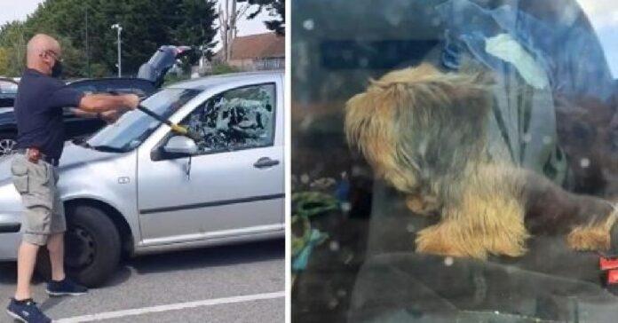 salvataggio yorkshire terrier intrappolato auto sotto sole