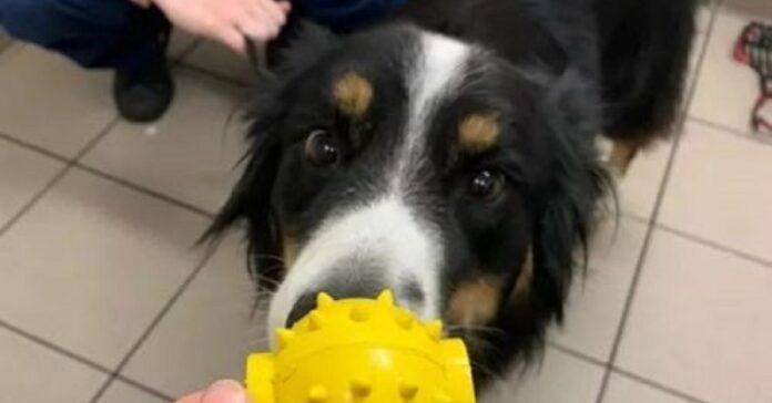 scout cane che ha rischiato vita a causa di una pallina