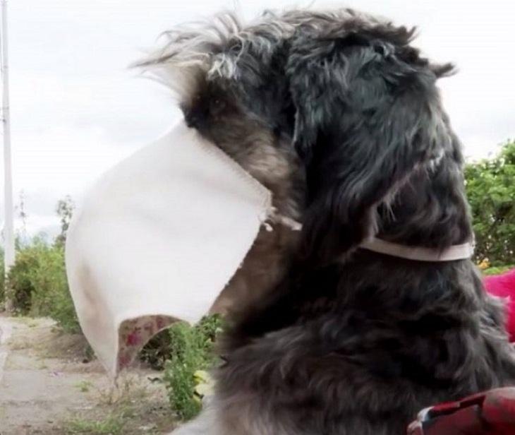 gudy cane utilizzo corretto mascherina