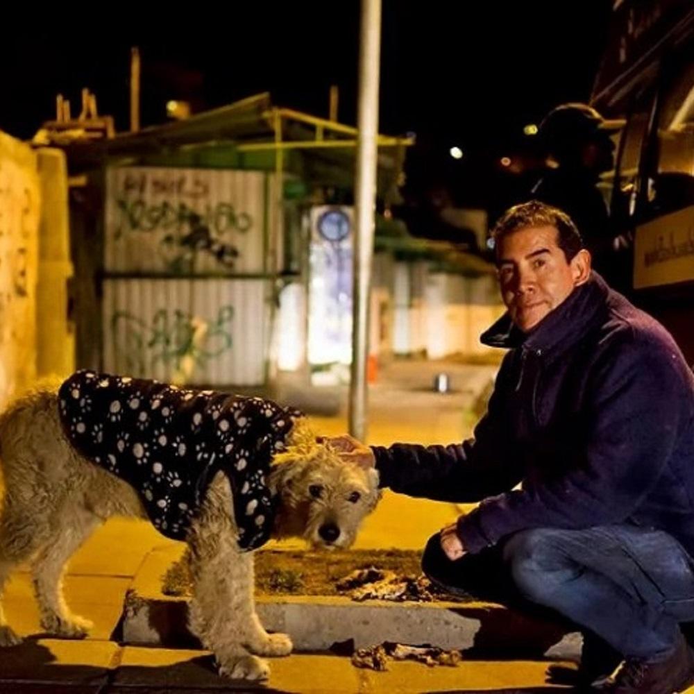 Uomo lascia il lavoro per dedicarsi completamente ai cani randagi (VIDEO)