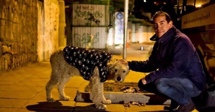 uomo lascia lavoro per dedicarsi completamente cani randagi