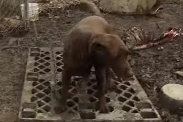 Chuckie il Labrador ritrova la famiglia dopo 5 anni e il video del ricongiungimento è emozionante