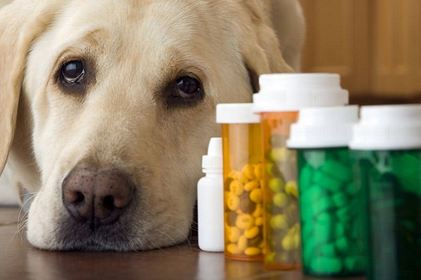 cane e pillole